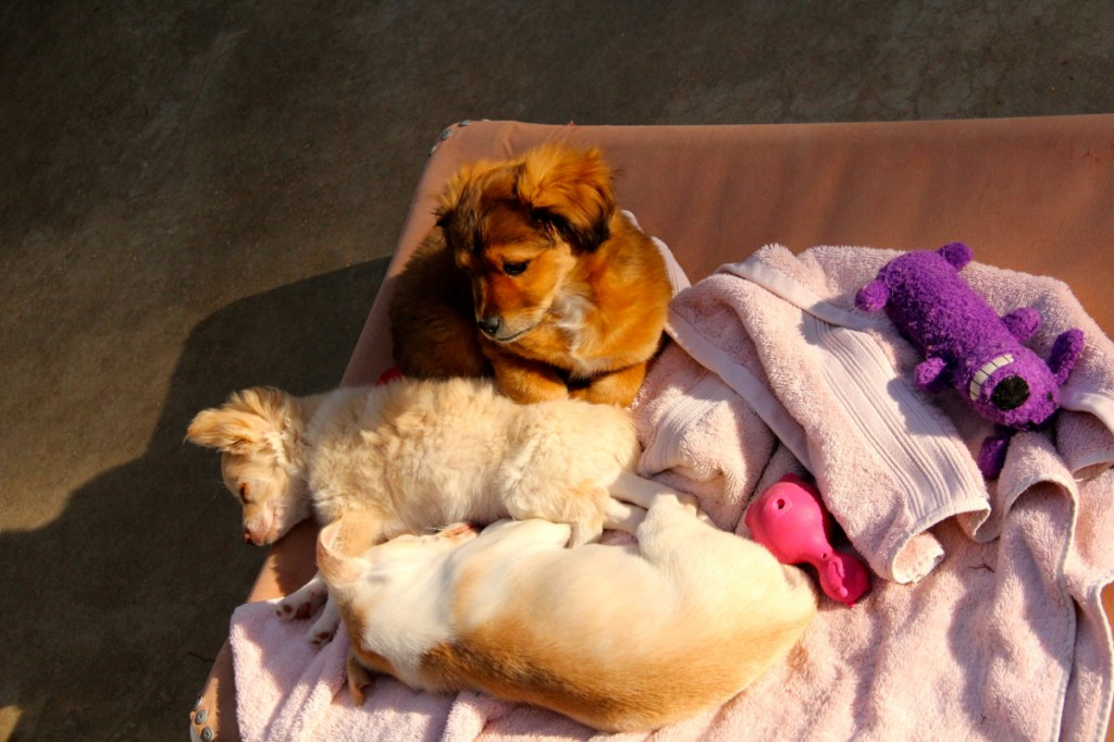 A group of puppies sunbathing. Photo by Kai Lin.