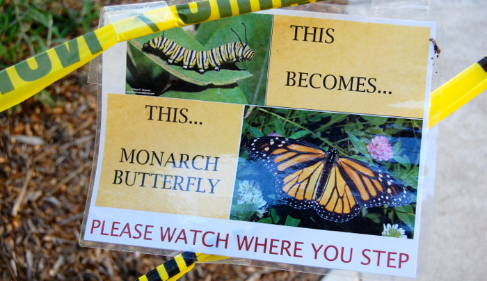 These educational signs have now been placed around the milkweed habitat at the Upper Campus -- Photo by Fred Alvarez