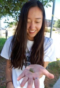 Sophomore Winnie Chang is among the students drawn to the caterpillar habitat -- Photo by Fred Alvarez