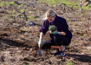 Senior Sarah Sharpe uses a spade to prepare a new home for native vegetation on Anacapa Island -- Photo by Kendall Shiffman