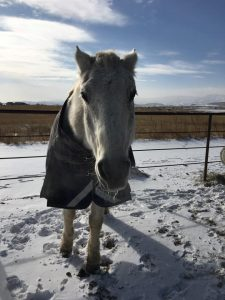 Kronos, a Southern California boy, has had to get used to the Colorado cold.